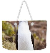 Blue Footed Boobie Dancing Galapagos Weekender Tote Bag