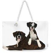 Boxer Pups Weekender Tote Bag by Mark Taylor