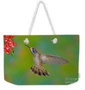Brown Violet-ear Hummingbird Weekender Tote Bag