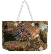 Burrfish And Cleaner Goby Weekender Tote Bag
