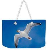 Calling Herring Gull Flying In Blue Sky Weekender Tote Bag