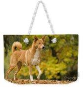 Canaan Dog Weekender Tote Bag