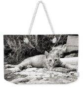Cat And Lavender  Weekender Tote Bag