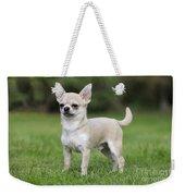 Chihuahua Dog Weekender Tote Bag