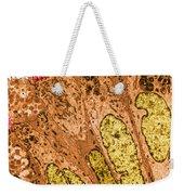 Ciliated Epithelium Of Oviduct, Sem Weekender Tote Bag