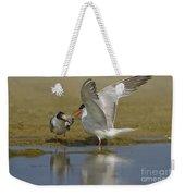 Common Tern Sterna Hirundo Weekender Tote Bag by Eyal Bartov