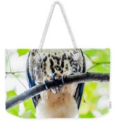 Coopers Hawk Perched On Tree Watching For Small Prey Weekender Tote Bag