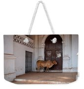 Cow At Church At Colva Weekender Tote Bag