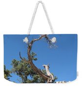 Dead Tree At Grand Canyon Weekender Tote Bag