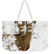 Doe Mule Deer In Snow Weekender Tote Bag