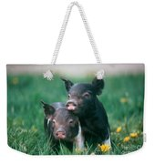 Domestic Piglets Weekender Tote Bag