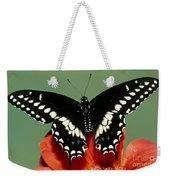 Eastern Black Swallowtail Butterfly Weekender Tote Bag