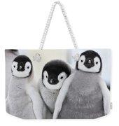 Emperor Penguin Chicks Weekender Tote Bag