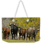 Florida Spanish Cattle Weekender Tote Bag