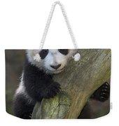 Giant Panda Cub In Tree Weekender Tote Bag
