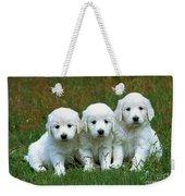 Golden Retriever Puppies Weekender Tote Bag