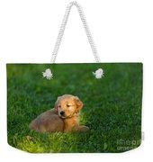 Golden Retriever Puppy Weekender Tote Bag