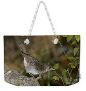 Gray-cheeked Thrush Weekender Tote Bag
