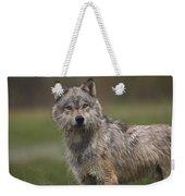 Gray Wolf  North America Weekender Tote Bag