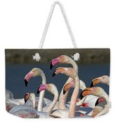 Greater Flamingos, France Weekender Tote Bag