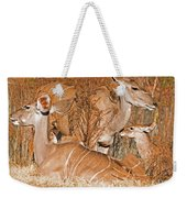 Greater Kudu Mother And Baby Weekender Tote Bag