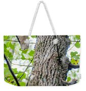 Hawk Hunting For A Squirrel On An Oak Tree Weekender Tote Bag
