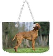 Hungarian Vizsla Dog Weekender Tote Bag
