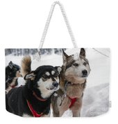 Husky Dogs Pull A Sledge  Weekender Tote Bag by Lilach Weiss