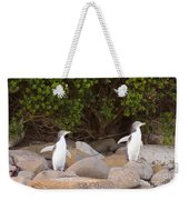 Juvenile Nz Yellow-eyed Penguins Or Hoiho On Shore Weekender Tote Bag