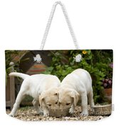 Labrador Puppies Eating Weekender Tote Bag