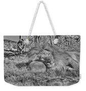 Lion In Repose Weekender Tote Bag