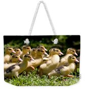 Yellow Muscovy Duck Ducklings Running In Hurry  Weekender Tote Bag