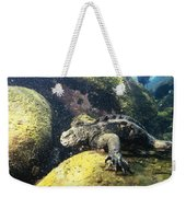 Marine Iguana Grazing On Seaweed Weekender Tote Bag