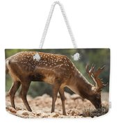 Mesopotamian Fallow Deer 2 Weekender Tote Bag