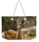 Mesopotamian Fallow Deer 3 Weekender Tote Bag