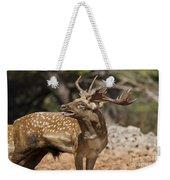 Mesopotamian Fallow Deer 4 Weekender Tote Bag