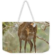 Mesopotamian Fallow Deer 5 Weekender Tote Bag