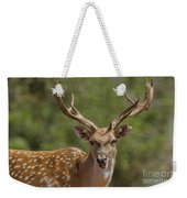 Mesopotamian Fallow Deer  Weekender Tote Bag