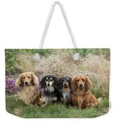 Miniature Long-haired Dachshunds Weekender Tote Bag