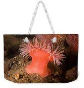 Northern Red Anemone Weekender Tote Bag