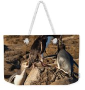 Nz Yellow-eyed Penguins Or Hoiho Feeding The Young Weekender Tote Bag