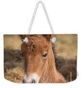 Portrait Of Newborn Foal Weekender Tote Bag