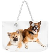 Icelandic Sheepdog Puppy And Adult  Weekender Tote Bag