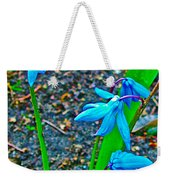 Scilla In New Maiden Cemetery In Moscow-russia  Weekender Tote Bag
