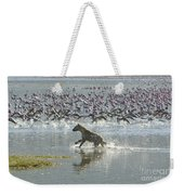 Spotted Hyaena Hunting For Food Weekender Tote Bag