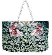 Spotted Porcelain Crab In Anemone Weekender Tote Bag