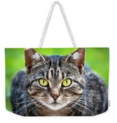 Stray Cat Stare Weekender Tote Bag