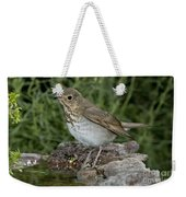Swainsons Thrush Weekender Tote Bag