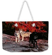 Timber Wolves Under  A Red Maple Tree Weekender Tote Bag