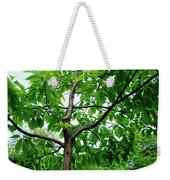 Trees In A Park, Adams Park, Wheaton Weekender Tote Bag